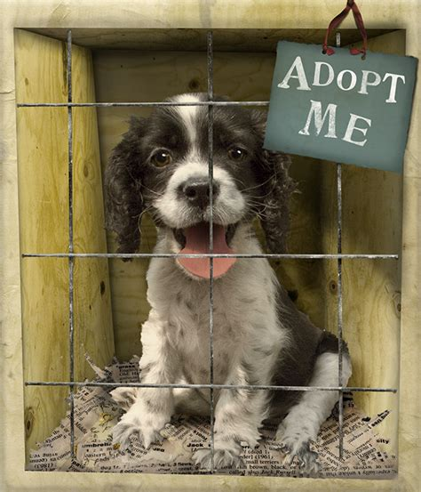 shelter puppies for adoption tips for adopting the best shelter alop