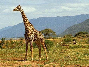 imagenes de animales la selva animales que viven en la selva de mexico pictures