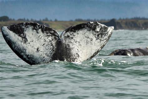 whale tail along the oregon coast http