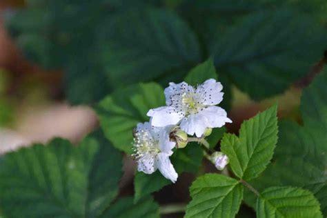 fiori bosco il bosco colleverde urbino montefeltro natura passeggiate