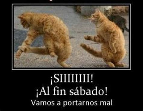 imagenes grraciosas feliz sabado a rumbear frases search and google search on pinterest