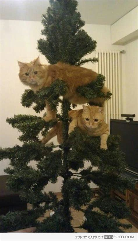 cats knocking over christmas trees pin by barbara griffith on cat stuff