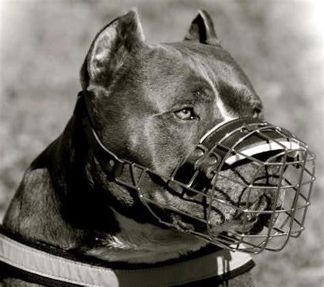 muzzle for pitbull pitbull wire muzzle wire basket muzzle for pitbull m9 m9 1072 cage