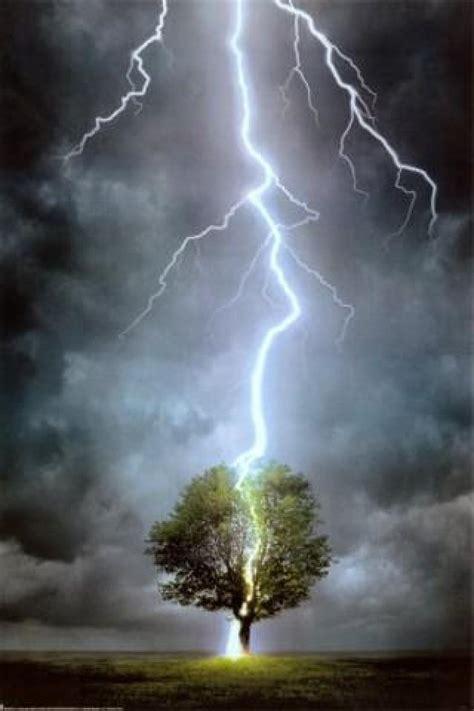 lighting tree lightning strikes tree images