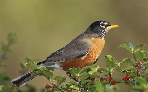 bird picture 1680x1050