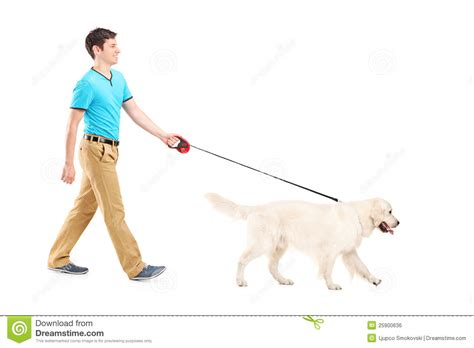 walking a puppy length portrait of a walking a royalty free stock image image