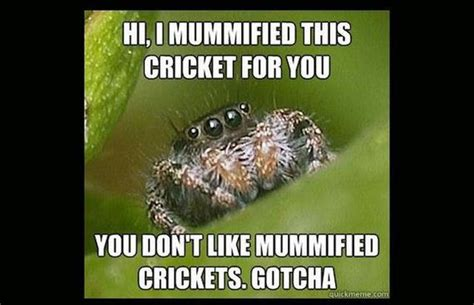 Meme Spider - spider meme pictures to pin on pinterest pinsdaddy