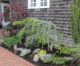 ornamental trees plant is too close planting