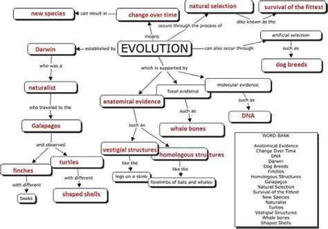 human evolution flowchart evolution concept map for the classroom