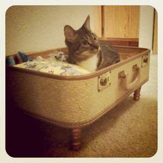cheap n easy dog bed diy cool cat dog products on pinterest pets cat beds and for cats