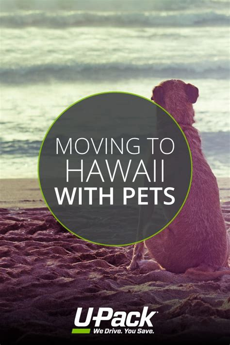 moving to hawaii with dogs 145 best moving resources images on learn how moving hacks and moving