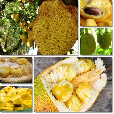 jackfruit glycemic index  glycemic load natureword