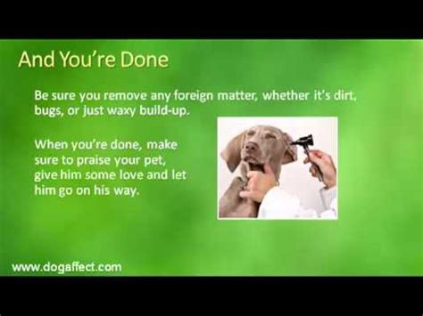 best way to clean dogs ears how to clean a dogs ears best way to clean your dogs ears