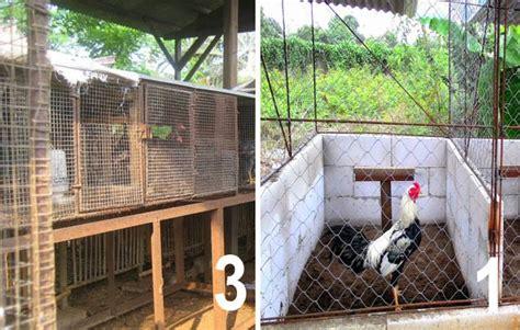 Alas Kandang Umbaran 3 jenis kandang ayam bangkok ukuran dan cara membuatnya