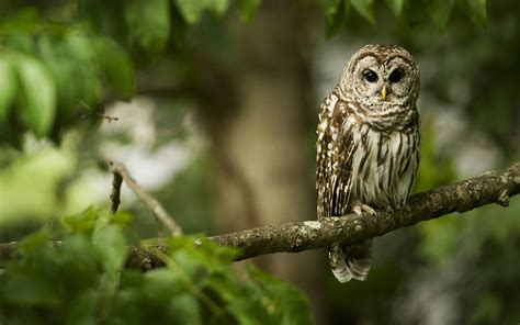 owl wallpaper 2560x1600 40774