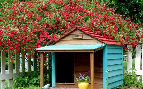 tettoie fai da te prezzi tettoie fai da te prezzi tettoia legno with tettoie fai