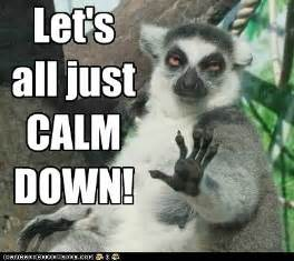 Calm Down Meme - calm down malialitman com