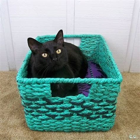 cute cat beds cute cat beds 28 images per your cat with one cosy