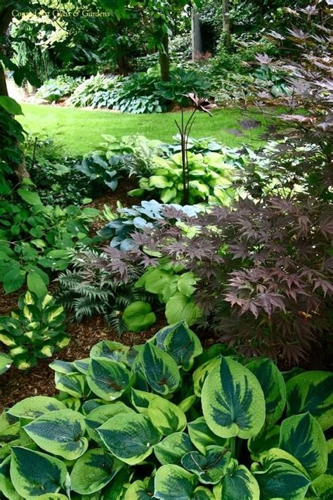17 best images about hosta ferns on pinterest great expectations shade garden and hosta