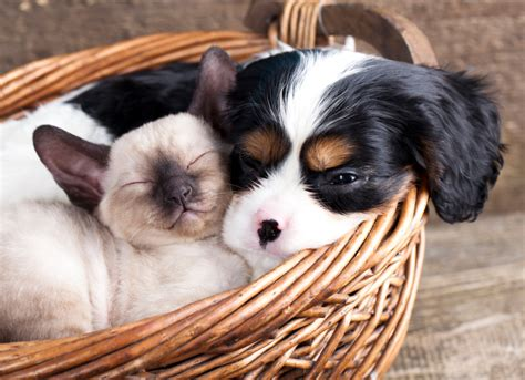 puppies and kittens cats and dogs 5 steps to keeping the peace