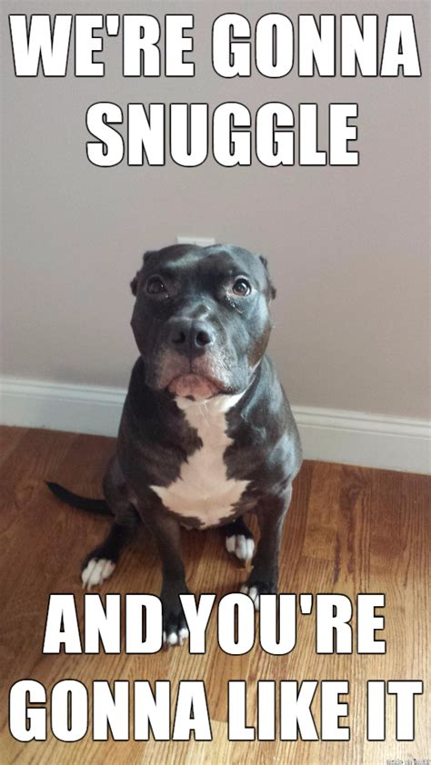 Pitbull Memes - its pitbull awareness month meme dog and animal
