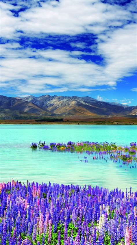 wallpaper  zealand river mountains flowers clouds  nature