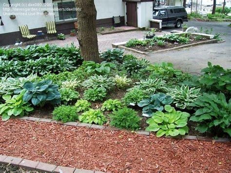 Gardening Help Beginner Gardening Help Oak Trees 1 By Dax080
