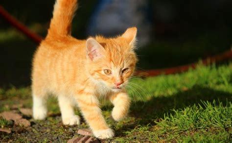 imagenes geniales de gatos cu 225 ntos a 241 os vive un gato curioteca animal