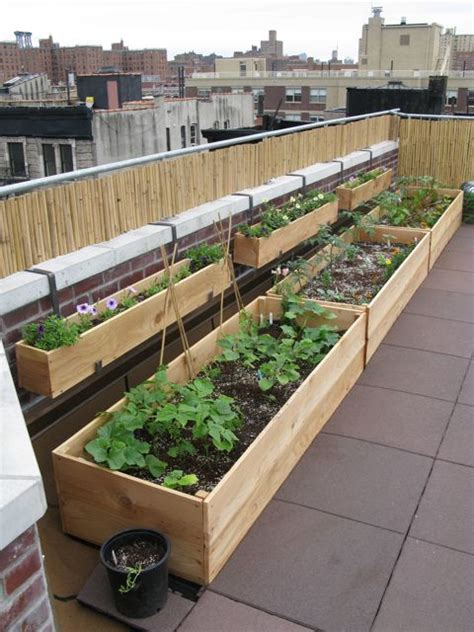 Planting a Roof Garden   Civil Eats