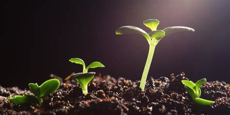 What Is A Church Planter by Adventist Review Church Planting Boom