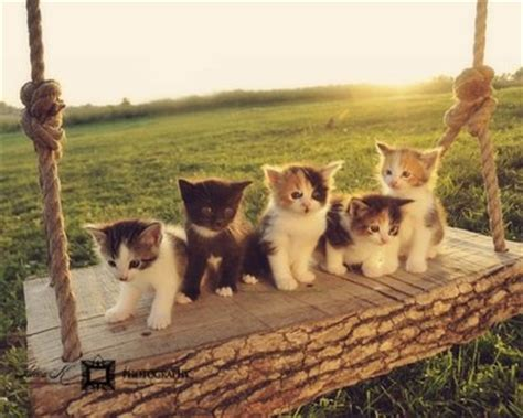 swing cats cute adorable kitten family on a swing cute fun