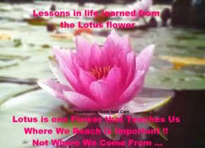 Lotus Sayings Lotus Flower Quotes Quotesgram