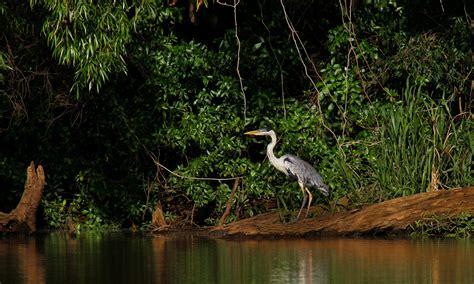 ajencia nacional de viviendas en young rio negro parque nacional esteros de farrapos e islas del r 237 o