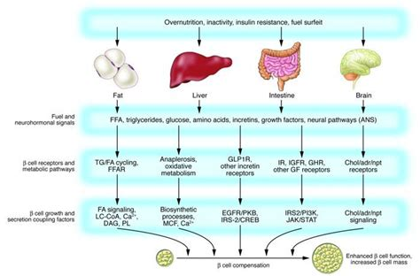 Insulin Also Search For Insulin Resistance Diabetes Insulin Resistance