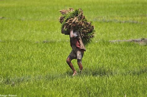 Background Check India Consensus Eludes Wto On Major Agriculture Issues India Protests Checks On Farm Export