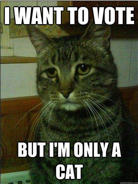 voting memes cat election 2012
