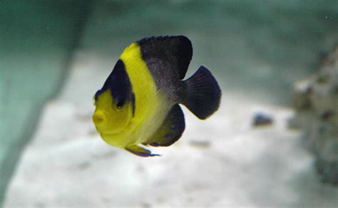 2 Tang Teh 25 Pcs 500g 84x48x30 now real page 31 reef central
