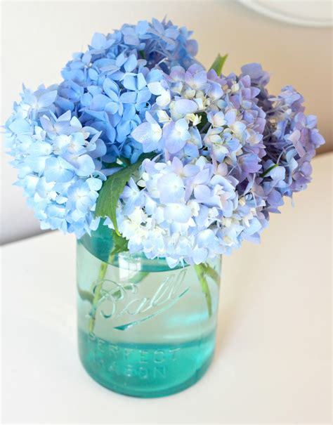 Can You Cut Hydrangeas For A Vase by Tip To Keeping Cut Hydrangeas Looking Fresh Of