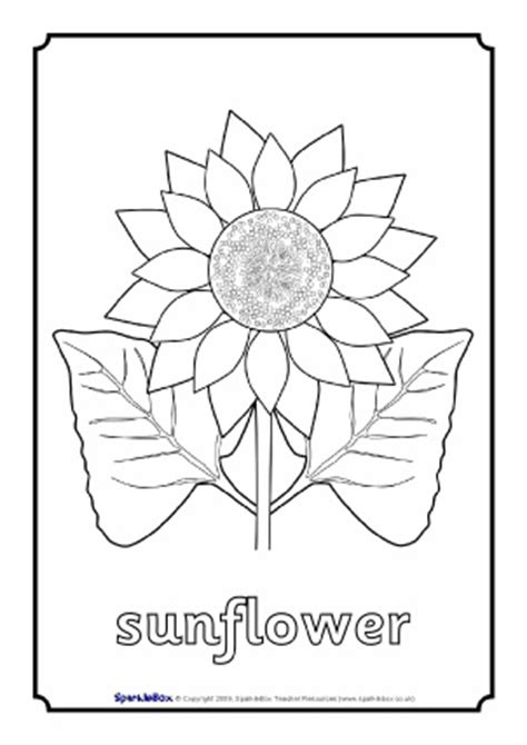 coloring pages of flowers with names flowers primary teaching resources and printables sparklebox