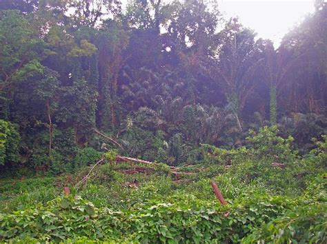 Limbe Botanic Garden Cameroon Trip Planner Plan Your Limbe Botanic Garden