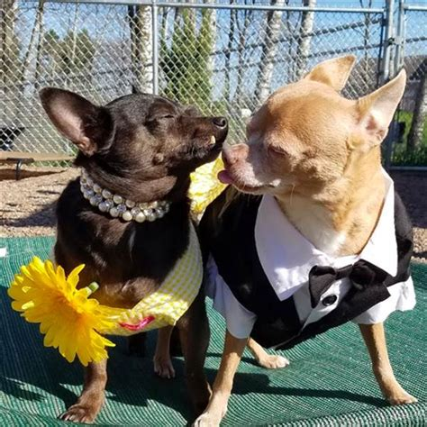 bobs house for dogs elderly shelter dogs get senior prom for a good cause today com