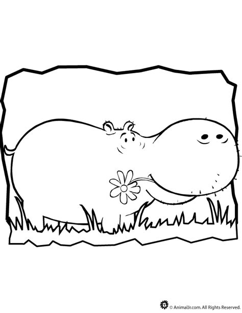 hippo coloring page printable hippo coloring page coloring home
