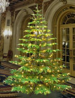 rocky gap christmas lights 7 best images about noble fir christmas tree on pinterest