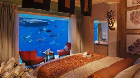 hotel room with aquarium wall amazing hotels with aquariums eccentric hotels