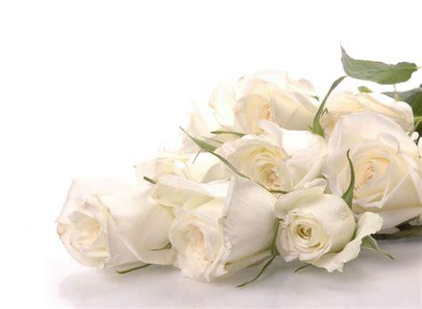 Bunga Mawar Cantik Edisi Bentuk sebuah makna dari bunga mawar izzan i nm2k