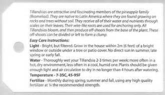 Wholesale Tropical Plants - tillandsia international bromeliad air plants