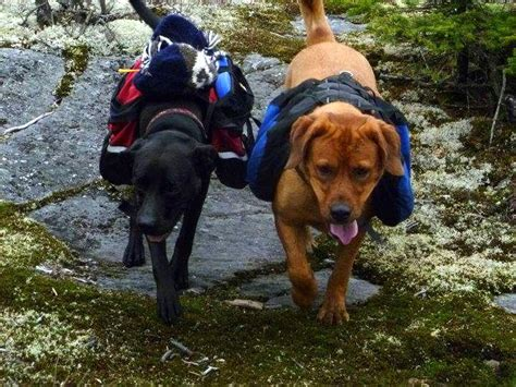 hiking dogs not being a person at bu is bu jd student blogs