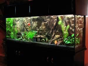 planted Discus aquarium with AquaTerra 3D background (picture heavy