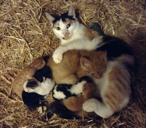 cat mama adopts big kitten   farm love meow