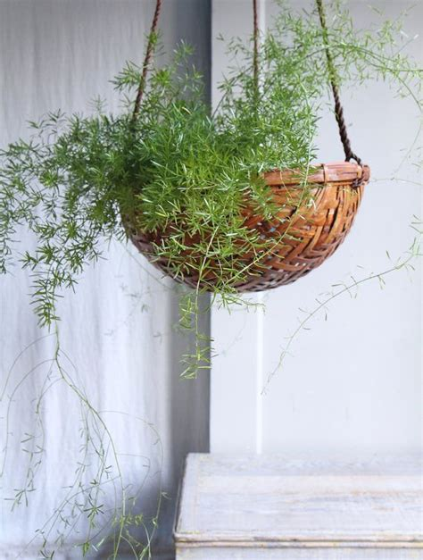 Hanging Planter Basket by Large Vintage Hanging Planter Basket Chevron
